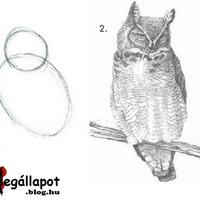 Gyorstalpaló - Tanulj meg rajzolni 2 lépésben