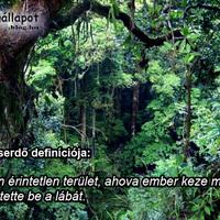 Az Őserdő definíciója