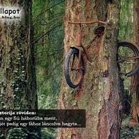 Bicikli a fában (kis érdekesség)