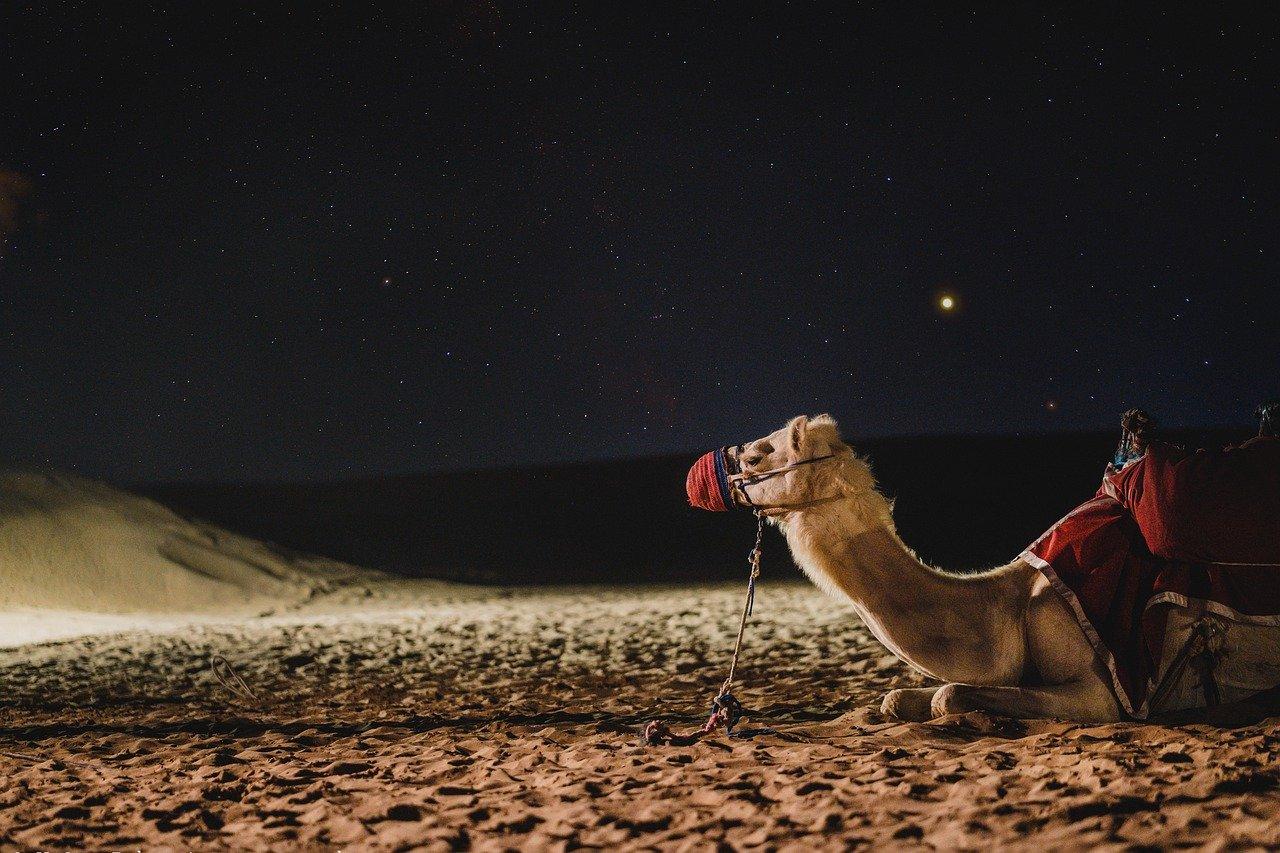 camel-4948299_1280.jpg
