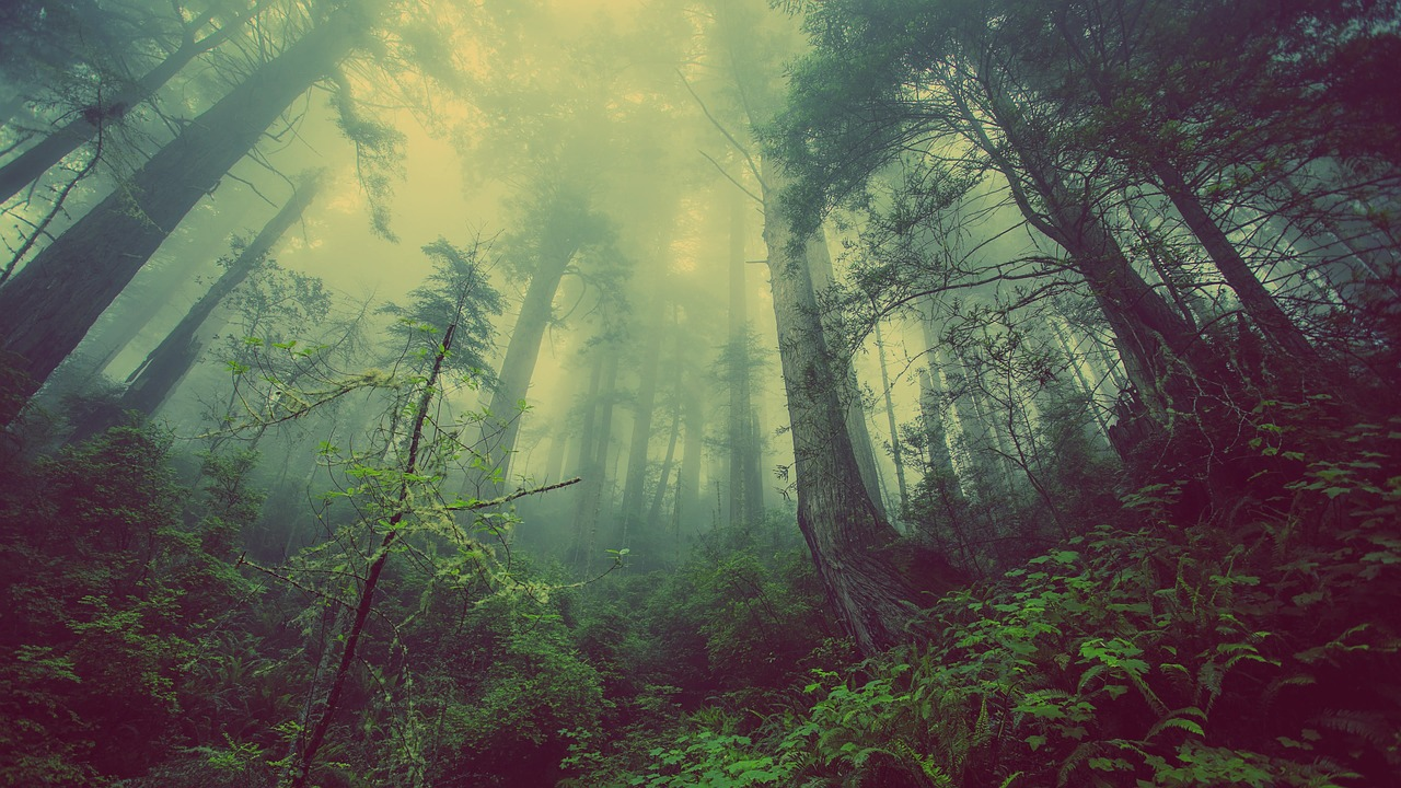 forest-931706_1280.jpg