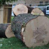 Ne vágj ki minden fát!