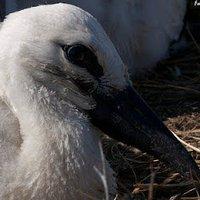 Vissza a természethez: egy gólyacsalád élete