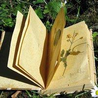 Virághatározás és herbáriumkészítés gyerekkel