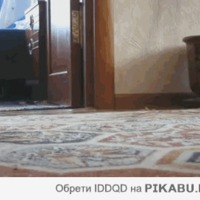 SP a TV-ben