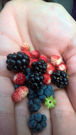 Az őszi erdő gyümölcsei