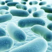 A nagy probiotikum átverés?