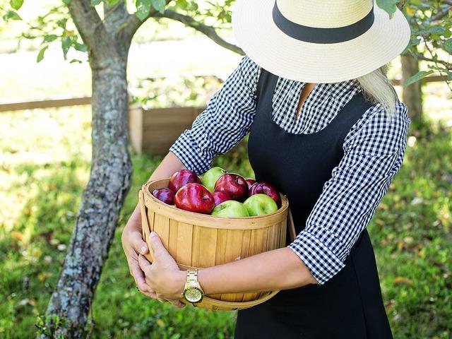 Számottevően sok alma terem az idén!