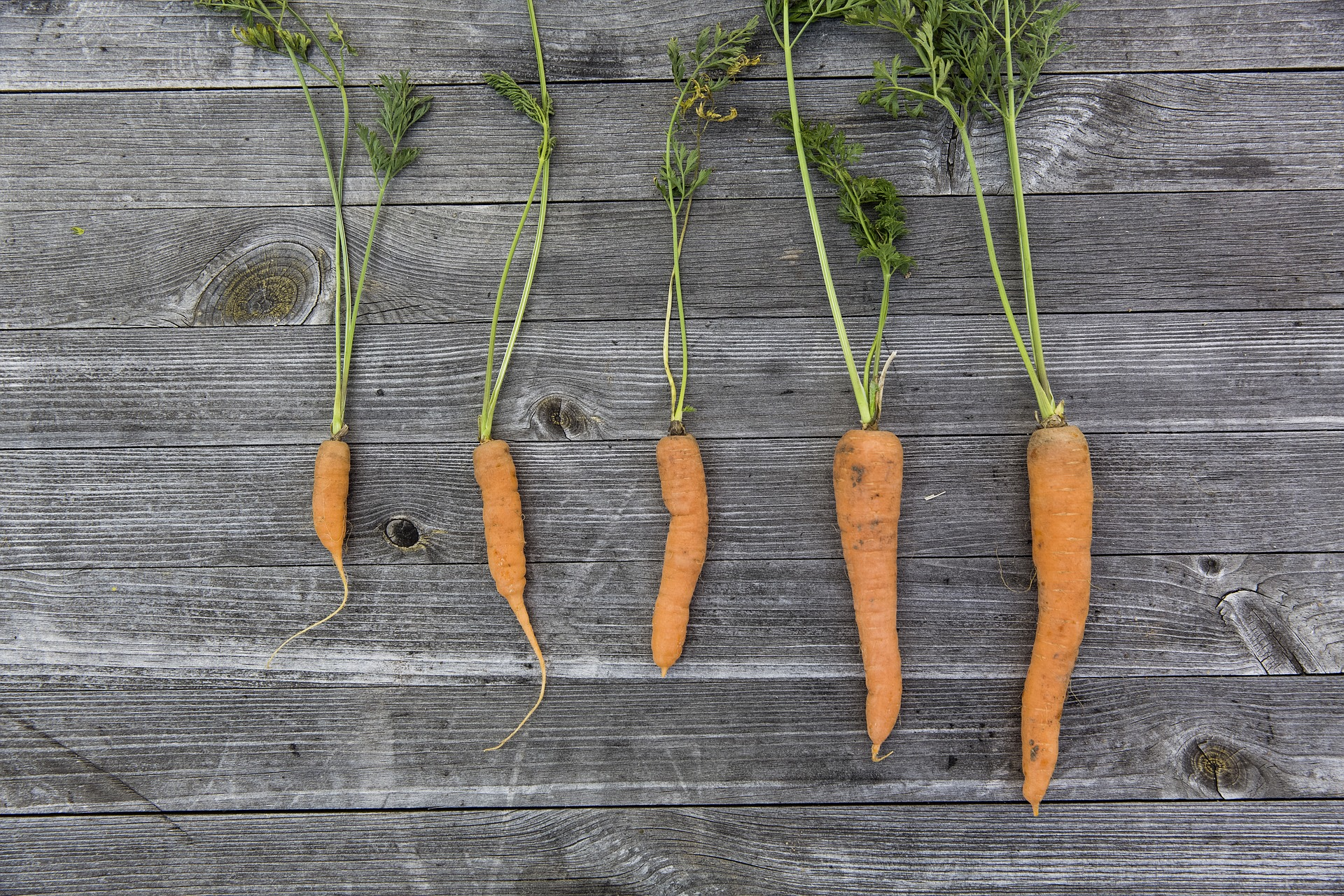 vegetables-1666632_1920.jpg