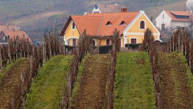 Ahol középkori szőlőből készül a pezsgő: Bencze Családi Birtok