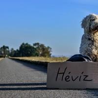 Miért akar a kutyusod Hévízre menni?
