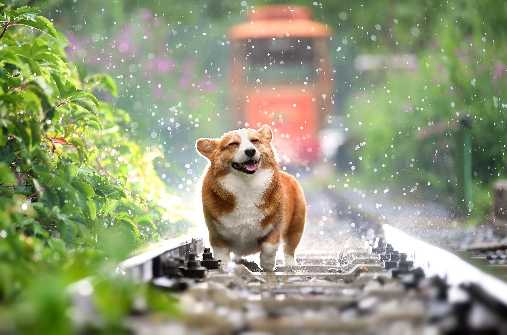 Rossz idő nincs, csak rossz öltözet! De mi van, ha Hévíz környékén nyaralsz és esik az eső?!