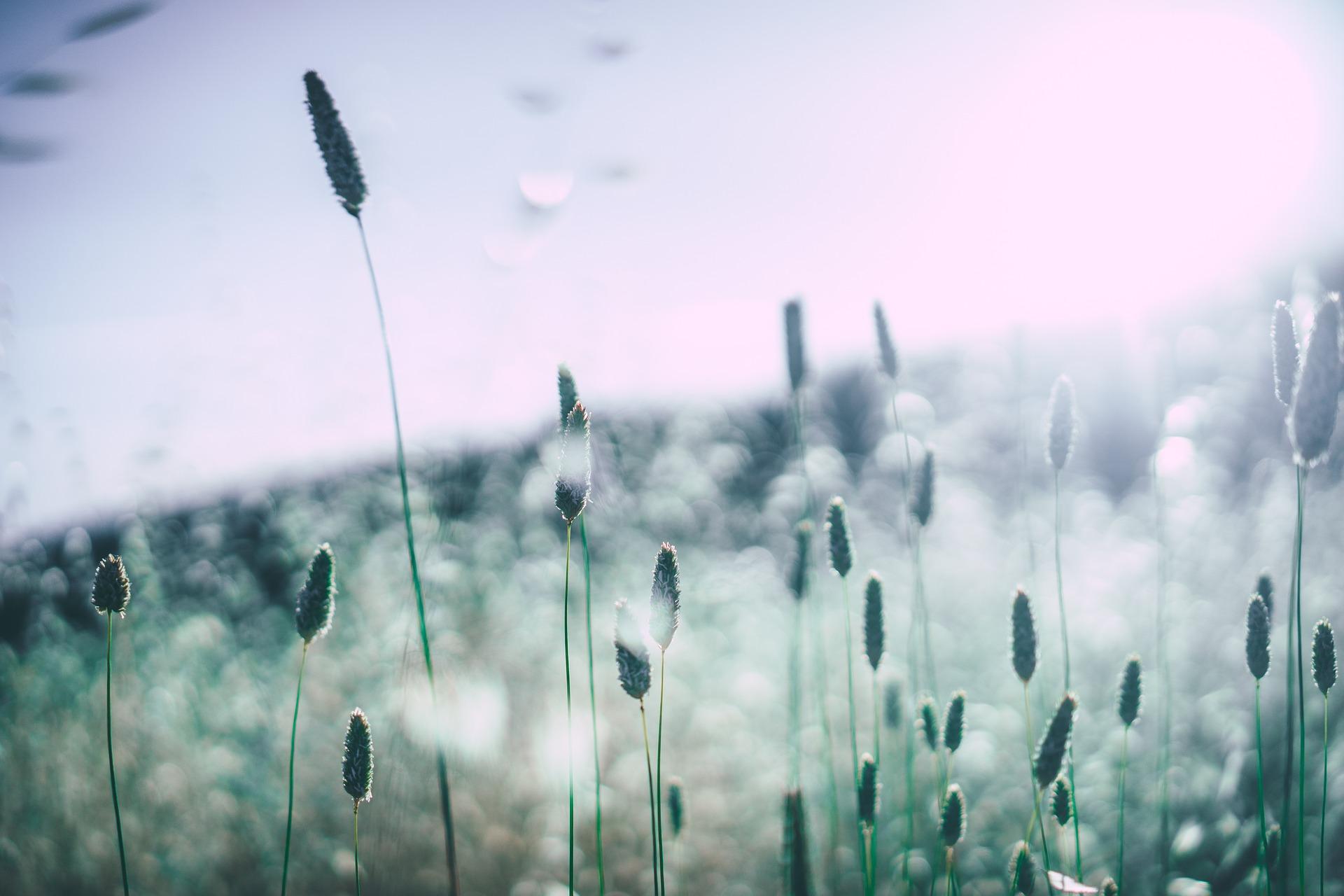Csak antihisztaminokkal élhető túl az allergia szezon?
