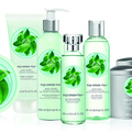 Ellenállhatatlan FUJI Green Tea kollekció a kozmetikában!