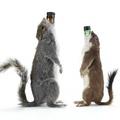 A skótoknál a mókusok ennyire szeretik a SÖRt :)