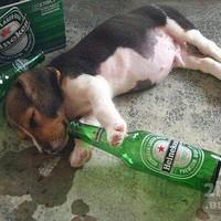 Állati SÖR - Néha el kell feküdni a nagy hajtásban :)