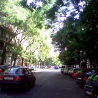Fák, hajléktalanok, grafittik