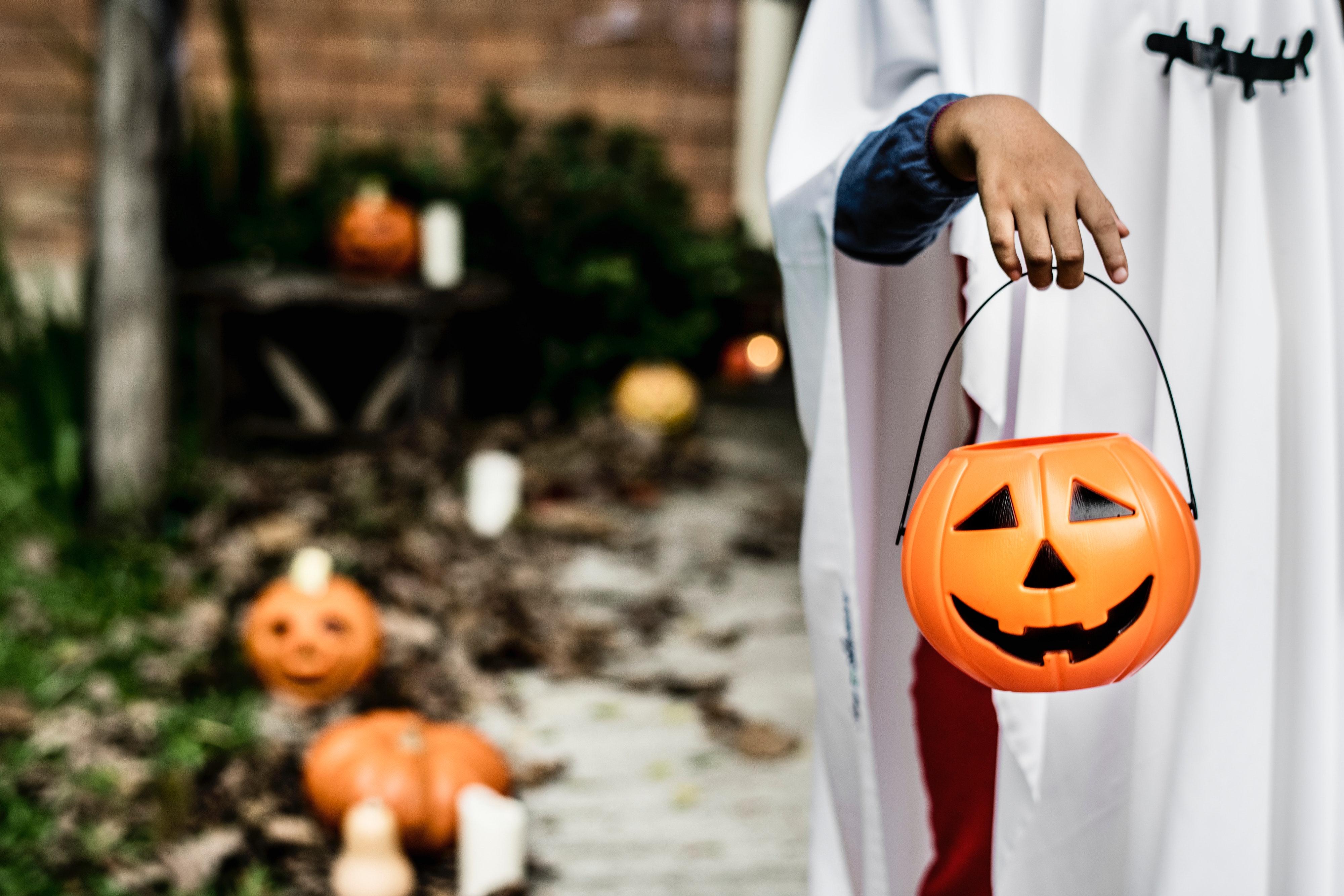 autumn-bucket-celebration-1374546.jpg