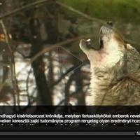 Vigyázat, magyar természetfilmek!