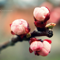 Végre itt a tavasz! - gondolta kisklau