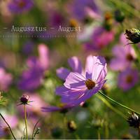 Indafotó háttérképek: 2015. augusztus