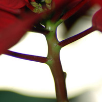 Piros-fehér-zöld minipályázatból néhány jó kép