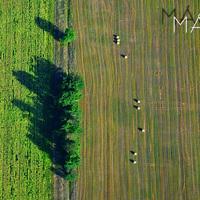 Indafotó háttérképek: 2013 május