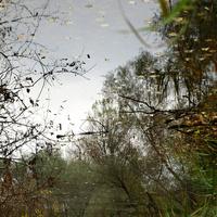 Fókuszban: A láthatatlan láp, Dunakeszi - Pacsker fotói