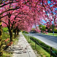 Gyümölcsfák virágzása - bodorpéter és tourista fotói