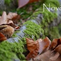Indafotó háttérképek: 2015. november
