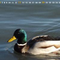Indafotó NAGYKÉPES háttérképek: 2013 január