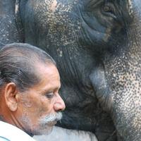 Elefántmenhely Indiában