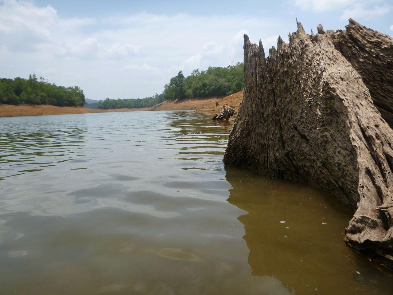 IndiaPass: Dzsungeltúra