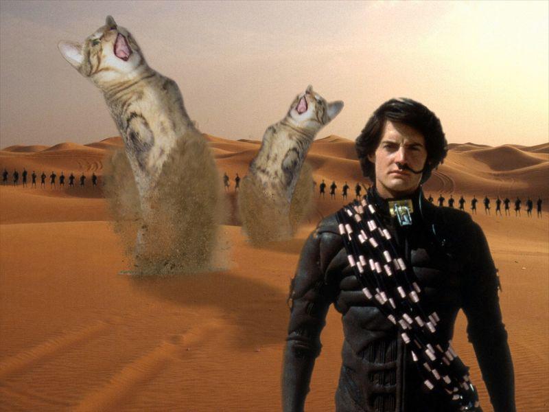 dune_meme_sci_fi_cat_macska_mem_kwisatz_haderach.jpg