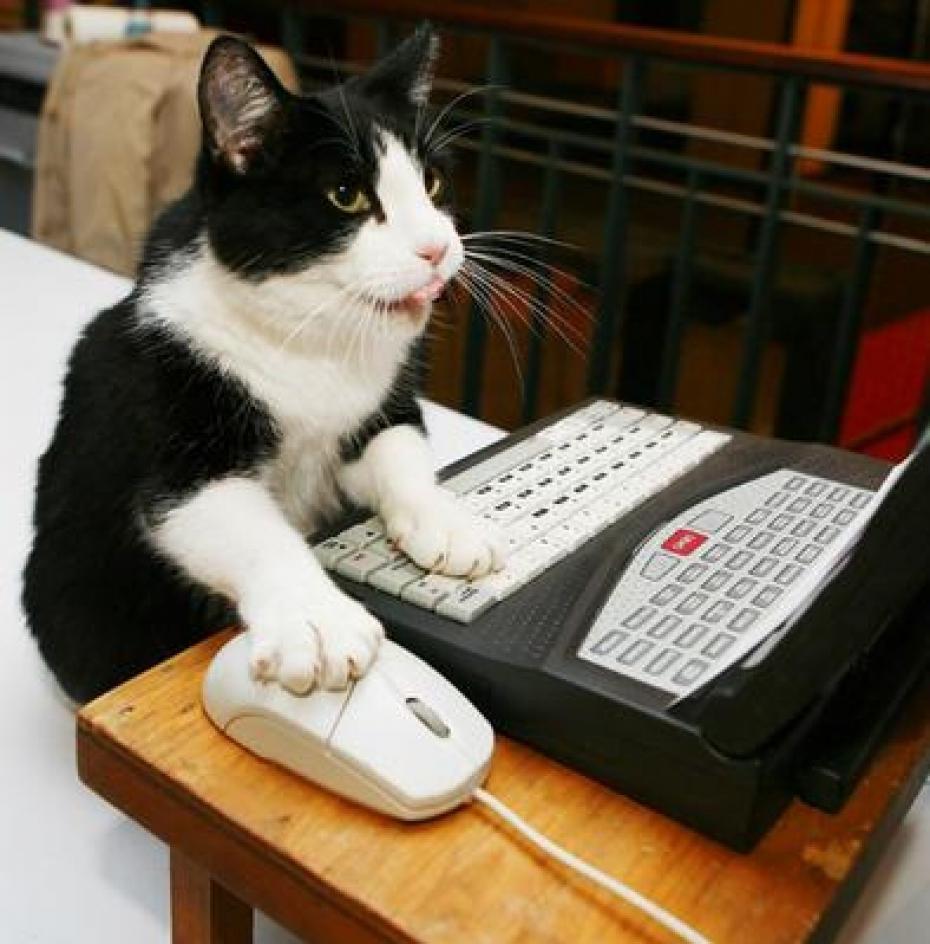 programozo-macska.jpg