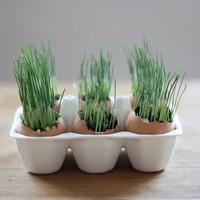 Húsvéti cukiság - tojás kertészet
