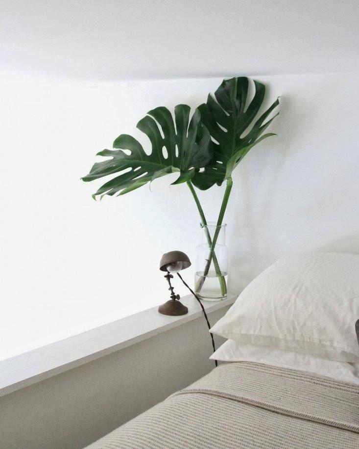 bed_monstera_erinboyle_gardenista.jpg