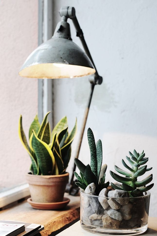 mother-in-laws-tongue-gardenista-snake-plant-1.jpg
