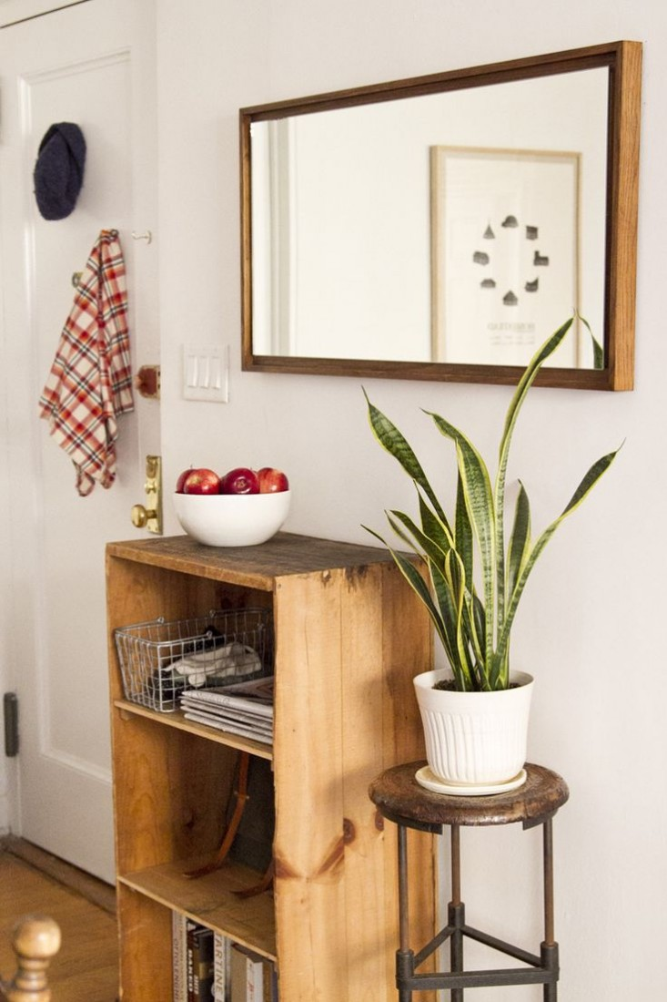 mother-in-laws-tongue-gardenista-snake-plant-10.jpg