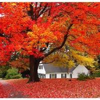 Milyen ingatlanokat érdemes vásárolni ősszel?