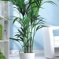 Légtisztító szobanövények (1. rész)