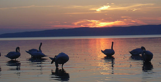 balaton-reservation-picture.jpg
