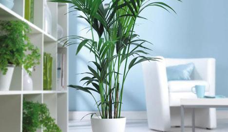 guide_indoor_plants_blog_article_mood.jpg