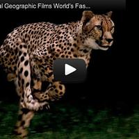 Így merevíti ki egy gepárd mozgását a National Geographic [blog.volgyiattila.hu]