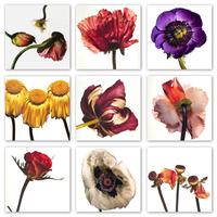 Irving Penn - virágok [2]*