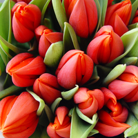 Talált fotó - tulipánok [1]