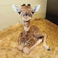 A legcukibb állatkölykök [25 fotó]