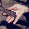 Megrázó és szívszorító fényképek szerte a világból