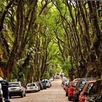 A világ legszebb utcája - Rua Goncalo de Carvalho