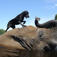 Örök barátság egy kutyus és egy elefánt között